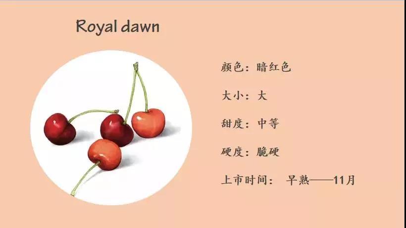 Royal dawn