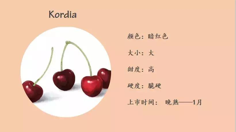 Kordia(科迪亚)